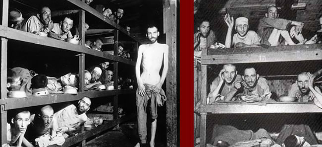 thesis on holocaust The holocaust was a horrific period full of gruesome experiences and losses this was a time when the jewish community could not live their lives to the fullest they had to hide their religious beliefs and fight to survive every day.